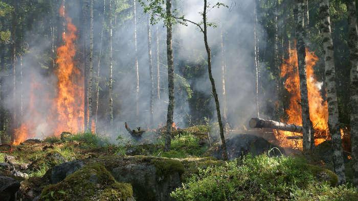 Gigantesque feu de forêt à Wanze